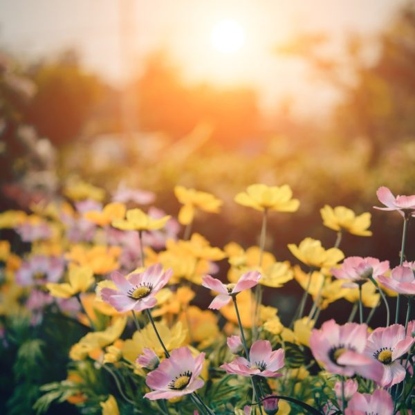Introducing the Top 5 Flowers for Spring | Dallas Landscaping Services Company | Southern Botanical